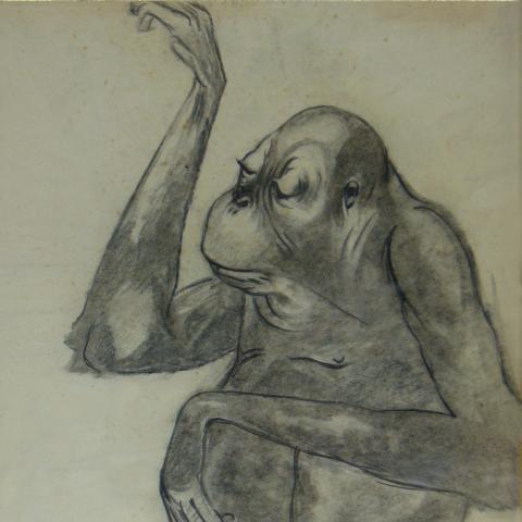 Jeune gorille.